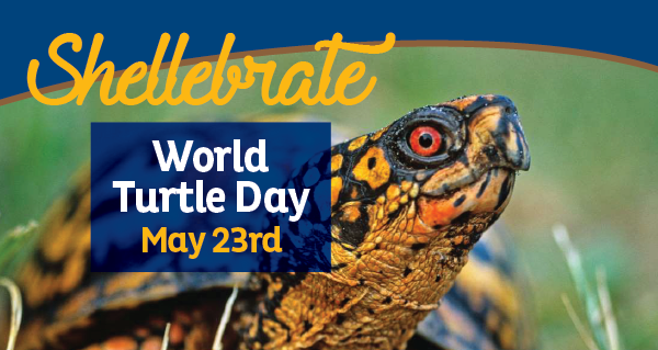 world turtle day.png